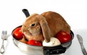 Календарь ухода за домашним кроликом по месяцам