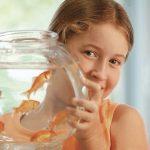 Аквариумные рыбки для ребенка