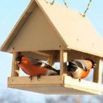 Дитячі віршики про птахів