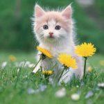 Дитячі віршики про котиків