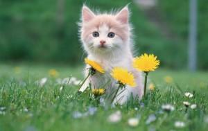 Детская песня «Тра-та-та, тра-та-та, мы везем с собой кота» (текст и музыка)