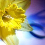 Найкращі привітання з 8 Березня українською мовою