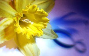 10 универсальных идей подарков на 8 Марта