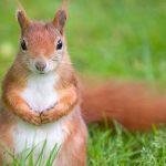 Дитячі загадки про лісових тварин