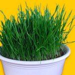 10 самых полезных продуктов апреля