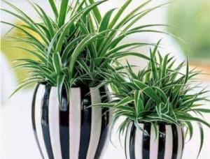 Корисні рослини, які можна вирощувати вдома