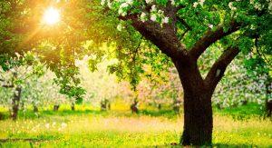 деревья, растения