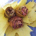 Блог читателя: как сделать розы из листьев