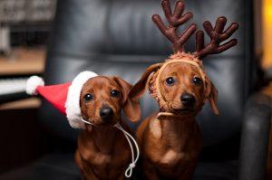 собака, новый год, праздник, животные