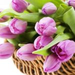 8 марта, цветы, тюльпаны