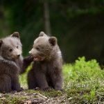 Дитячі віршики про ведмедя