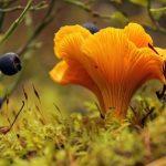 Віршики про гриби для дітей
