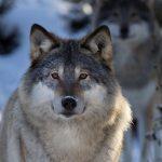 Пізнавальна вікторина для дітей: «Як зимують звірі»