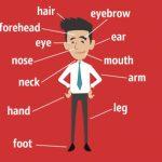 Назви частин тіла та органів англійською мовою