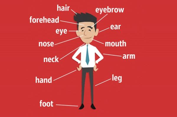 английский язык, части тела, органы