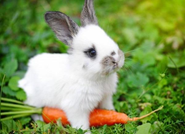 кролик, трава, животные, природа