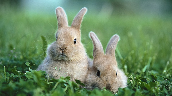 кролик, животные, трава, природа