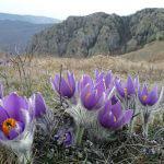 Усі квіти-первоцвіти України: фото та опис