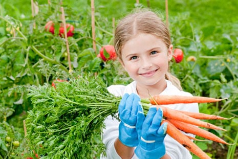 Отправляемся на огород с ребенком: занятия для малыша