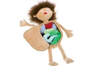 детская анатомия