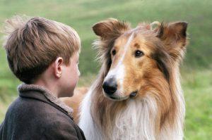 ТОП-10 фильмов о животных для всей семьи