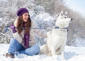 сніг, зима, собака