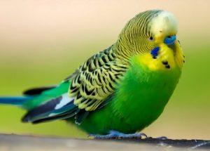 попугай, птица, животные