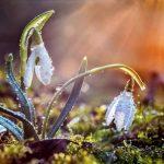 дождь, цветы, весна, подснежники, лес, природа