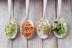 пшеница, зерна, витграсс, микрогрин