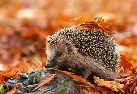 віршики про осінь