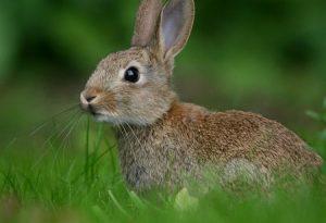 зайчик, заєць, заяц, трава, природа, лес, животные