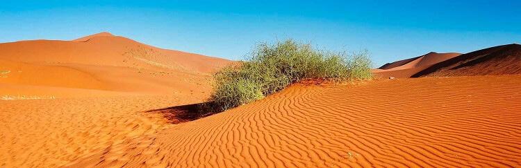Олешківські піски