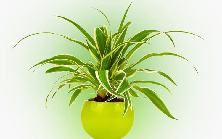 рослини для школи