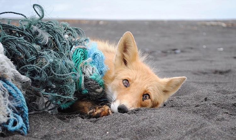 тварини і сміття