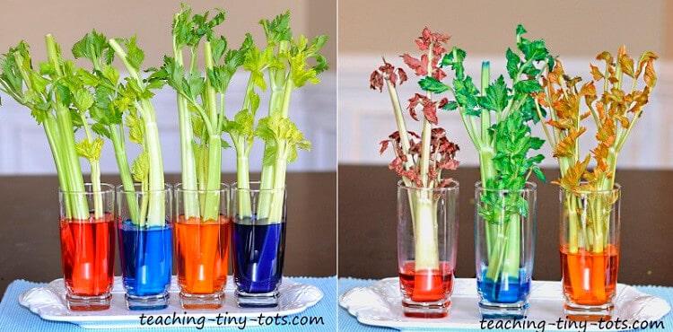 як рослини п'ють воду